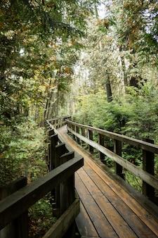 Verticaal schot van een houten weg die door groen in een bos wordt omringd