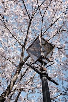 Verticaal schot van een lamp onder de mooie tot bloei komende kersenboom met de achtergrond van blauwe hemel