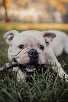 Verticaal schot van een leuke hond die op een stok kauwt