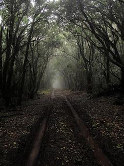 Verticaal schot van een modderige weg in het midden van hoge bomen met een mist