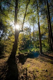Verticaal schot van een mooi schot in een bos met hoge bomen en de zon die op de achtergrond glanzen