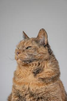 Verticaal schot van een oranje knorrige kat