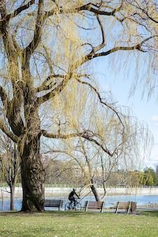 Verticaal schot van een persoon die op zijn fiets in het park op een zonnige dag rijdt