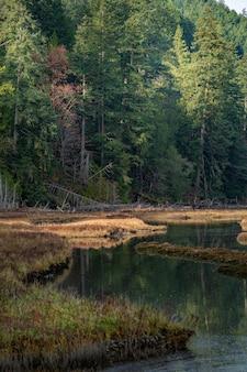 Verticaal schot van een prachtig groen landschap dat in het meer in canada nadenkt