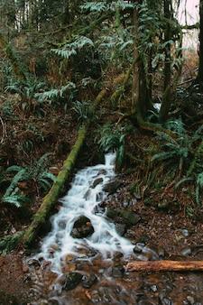 Verticaal schot van een rivier die door het bos overdag stroomt
