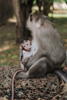 Verticaal schot van een schattige babyaap in de armen van moeder
