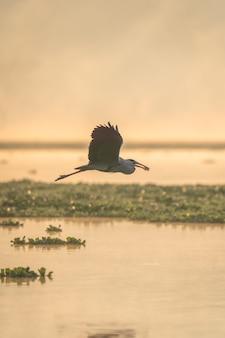 Verticaal schot van een vogel die boven het water met voedsel op zijn bek vliegt