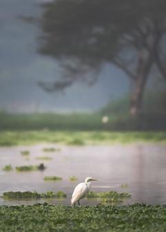 Verticaal schot van een vogel die zich onder een groene installatie bevindt die in het water drijft