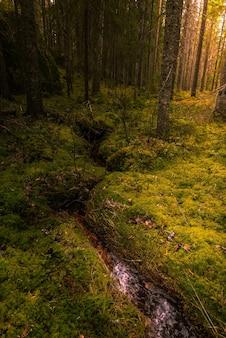 Verticaal schot van een waterstroom ion het midden van een bos met mos dat op de grond groeit