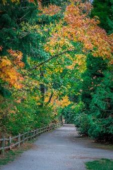 Verticaal schot van een weg die door mooie kleurrijke bomen gaan die in dagtijd worden gevangen