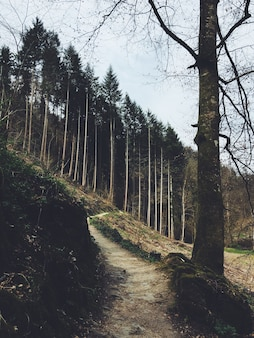 Verticaal schot van een weg die tot een bos op een heuvel leidt