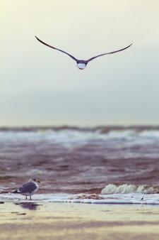 Verticaal schot van een zeemeeuw die over oceaangolven vliegt