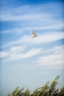 Verticaal schot van een zeemeeuw medio vlucht met een blauwe bewolkte hemel op de achtergrond overdag