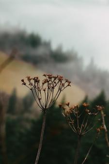 Verticaal schot van gedroogde fluitenkruid in een veld met een onscherpe achtergrond