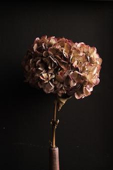 Verticaal schot van gedroogde hortensia's geïsoleerd op een donkere muur