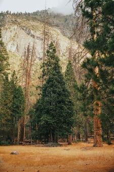 Verticaal schot van grassen met hoge bomen en een rotsachtige berg