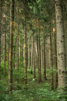 Verticaal schot van groeiende bomen in het gebied onder het zonlicht