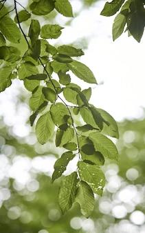 Verticaal schot van groene bladeren op een tak
