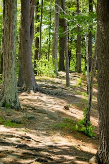 Verticaal schot van groene bomen en een modderige weg in een mooi bos op een zonnige dag