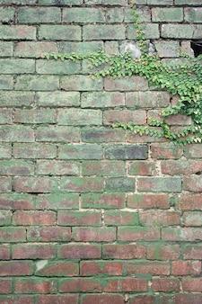 Verticaal schot van groene installaties die op een oude roestige geplaveide muur groeien