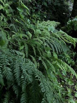 Verticaal schot van groene planten die in het bos groeien