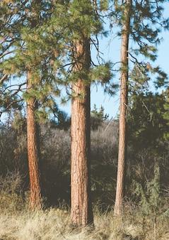 Verticaal schot van hoge bomen in de tuin