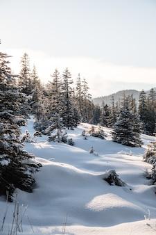 Verticaal schot van hoge bomen in de winter