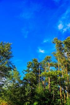 Verticaal schot van hoge bomen van het park met de blauwe hemel op de achtergrond