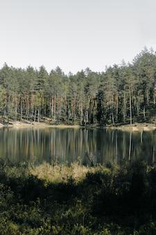 Verticaal schot van hoge bomenbezinning over het meer in het park