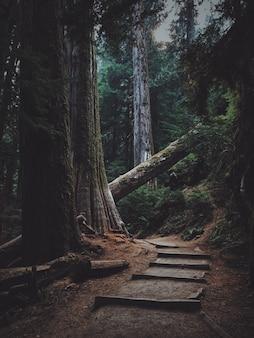 Verticaal schot van houten treden in het bos dat door een omgevallen boom wordt geblokkeerd