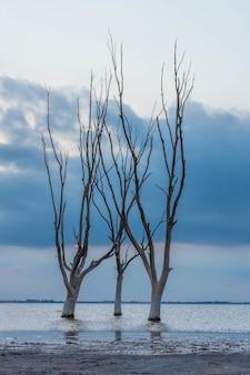 Verticaal schot van kale bomen in het meer op de blauwe bewolkte hemelachtergrond