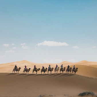 Verticaal schot van mensen die kamelen berijden op een zandduin in de woestijn