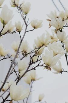 Verticaal schot van mooie witte bloesem op een tak van een boom
