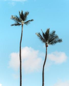 Verticaal schot van palmbomen tegen de blauwe hemel