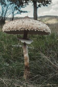Verticaal schot van parasolzwam in de natuur