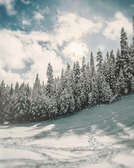 Verticaal schot van pijnboombomen op een heuvel die in sneeuw onder een witte bewolkte hemel wordt behandeld
