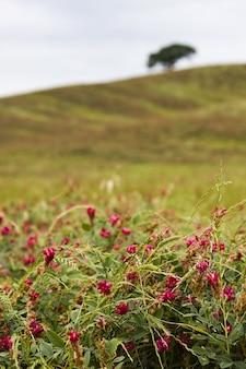 Verticaal schot van roze bloemen op een veld