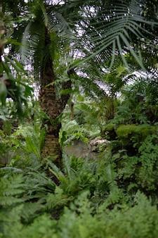 Verticaal schot van tropische groene bomen en veel struiken