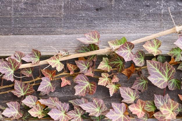 Verticaal schot van verschillende bladeren die op een houten oppervlak groeien