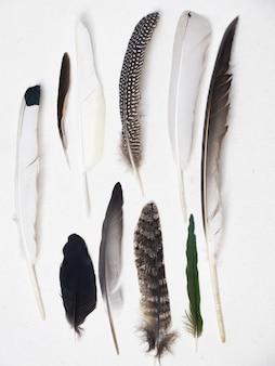 Verticaal schot van verschillende veren