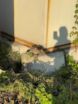 Verticaal schot van vrouwelijke silhouetschaduw die wilde zwerfkat in de zon aait