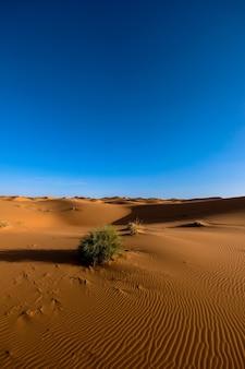 Verticaal schot van zandduinen met struiken onder een duidelijke blauwe hemel overdag