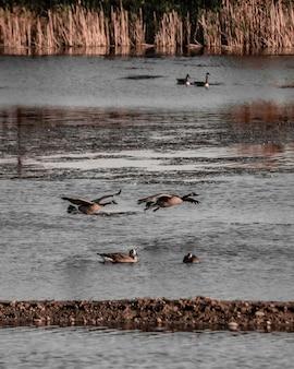 Verticaal schot van zeevogels die dichtbij het water vliegen