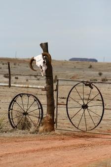 Verticaal van een koe schedel op een hek in een woestijn gebied in new mexico