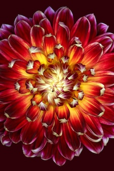 Verticale afbeelding van een prachtige rode en gele bloem