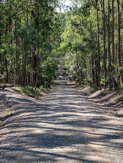 Verticale afbeelding van een weg omgeven door bomen in een bos onder het zonlicht