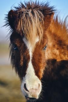 Verticale close-up die van een bruin paard is ontsproten dat naar de camera staart