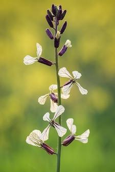 Verticale close-up die van een lavendel van het varenblad op vaag is ontsproten