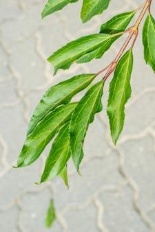 Verticale close-up die van een tak met groene bladeren en een onscherpe hieronder geplaveide grond is ontsproten
