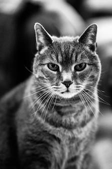 Verticale close-up grijstinten shot van een pluizige binnenlandse kat, zittend op de vloer